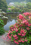 Shore Acres State Park, OR: Rhododendron 'Golden Gate' blooming by the pond at the Simpson Estate Garden in spring.