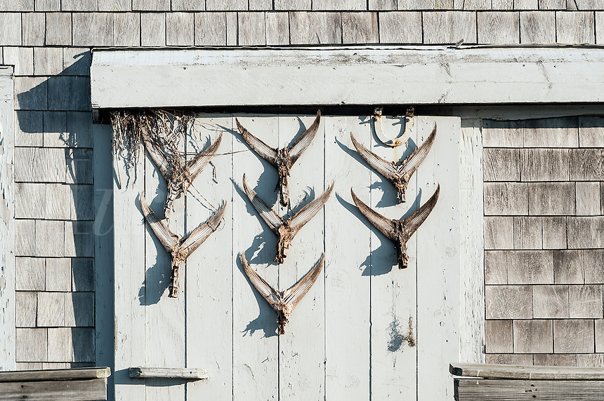Rustic shack with fish tail dispay on door, Taylors Pond, Cape Cod, Massachusetts, USA