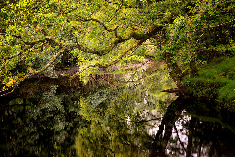 Calm placid waters of Gearhmeen River, Killarney National Park, Ireland