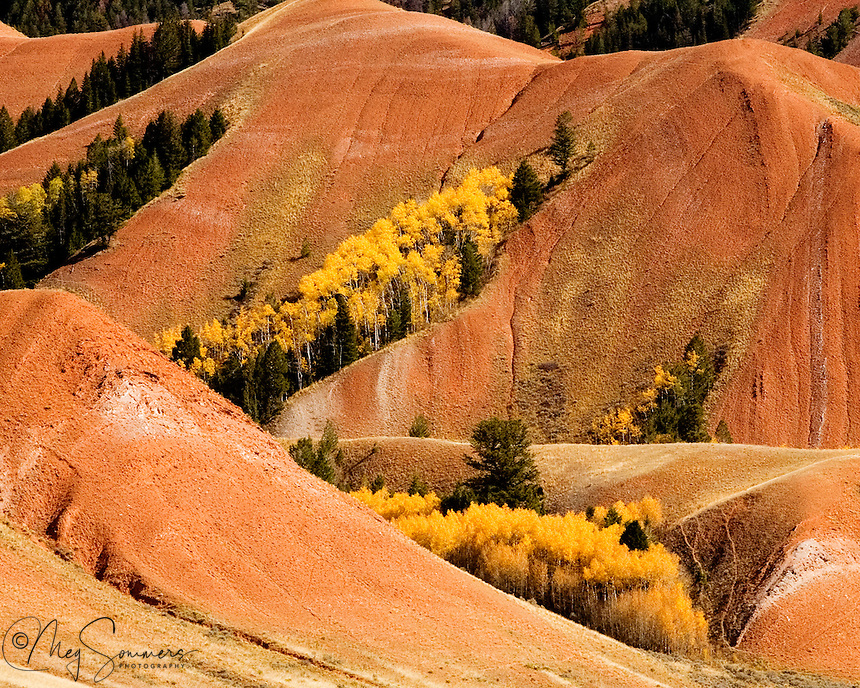 The red earth of the Gros Ventre Range blends with the brilliant yellow of aspens at their peak.<br />