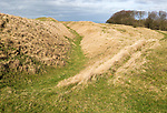 Ditches and ramparts of Oldbury Castle and Iron Age hill fort in a chalk downland area of North Wessex Downs, near Cherhill, Wiltshire, England, UK