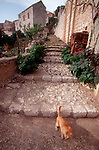 Croatia, Lastovo Island, Lastovo, Dalmatian Islands, Local cat, Stone steps, Hill town, .