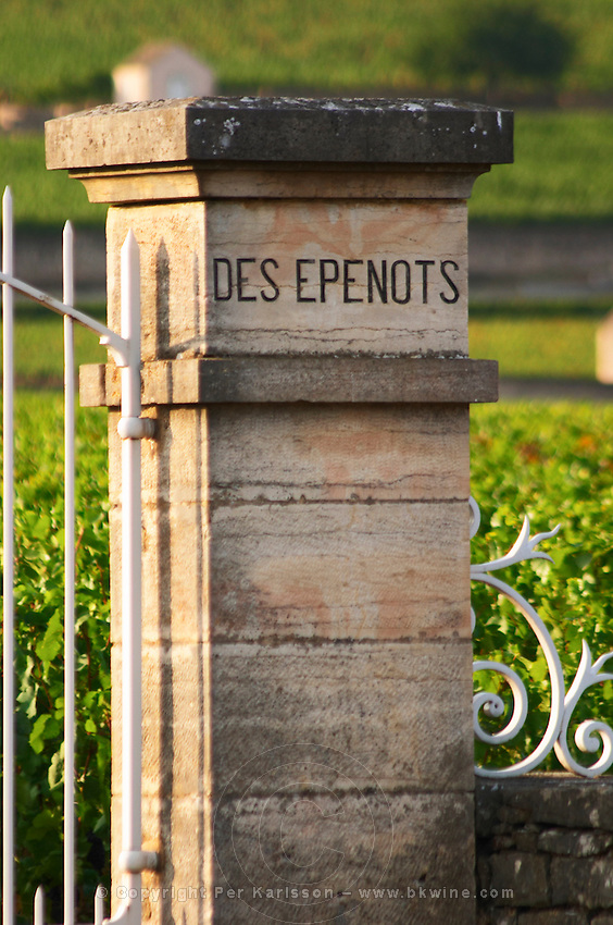 vineyard les epenots pommard cote de beaune burgundy france