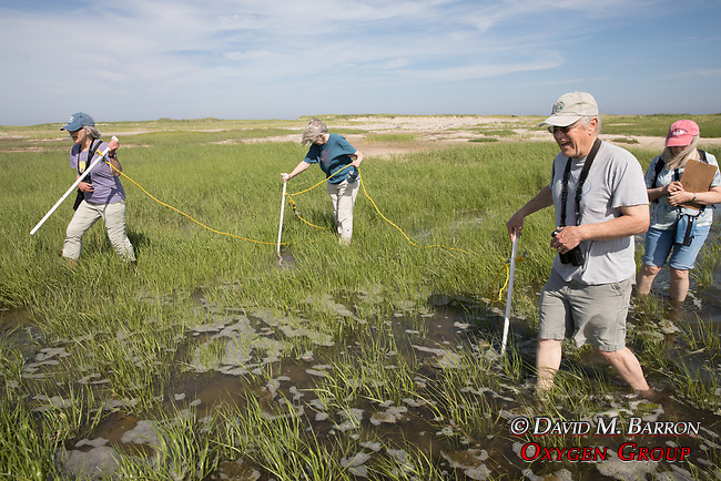 Bob,  Mary, Judith & Diane On Horseshoe Crab Survey