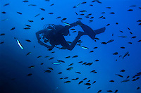 France marseille diver swimming among a school of fishes