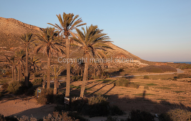 Palm trees near the Playazo de Rodalquilar, in the Cabo de Gata-Nijar Natural Park, Almeria, Andalusia, Southern Spain. The park includes the Sierra del Cabo de Gata mountain range, volcanic rock landscapes, islands, coastline and coral reefs and has the only warm desert climate in Europe. The park was listed as a UNESCO Biosphere Reserve in 1997 and a Specially Protected Area of Mediterranean Importance in 2001. Picture by Manuel Cohen