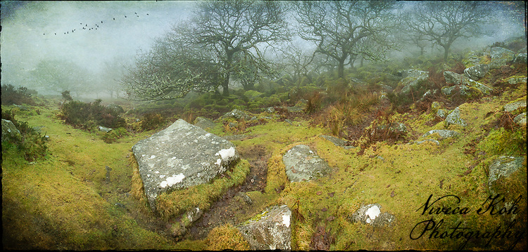Approaching Wistman's Wood, Dartmoor