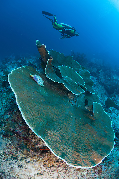 A diver looks on at coral growth on Jamue Boo, Raja Ampat