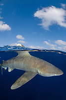 oceanic whitetip shark, Carcharhinus longimanus, Columbus Point, Cat Island, Bahamas, Caribbean Sea, Atlantic Ocean