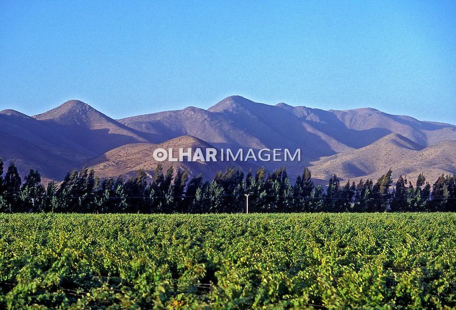 Videiras no vale do Rio Elqui. Chile. 1993. Foto de Salomon Cytrynowicz.