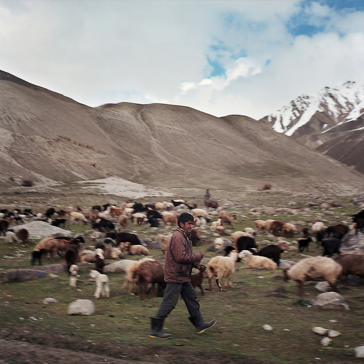 A young Wahki shepherd stands walks past his sheep and goats in the Big Pamir Mountains.