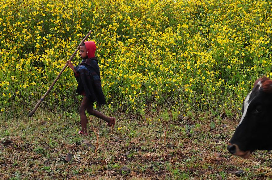 The Bahirdar region of Ethiopia