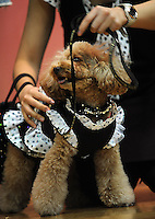 Dogs at the Osaka Pet Expo fashion show held from 23rd till 25th September 2011, Japan.<br /> <br /> Photo by Richard Jones