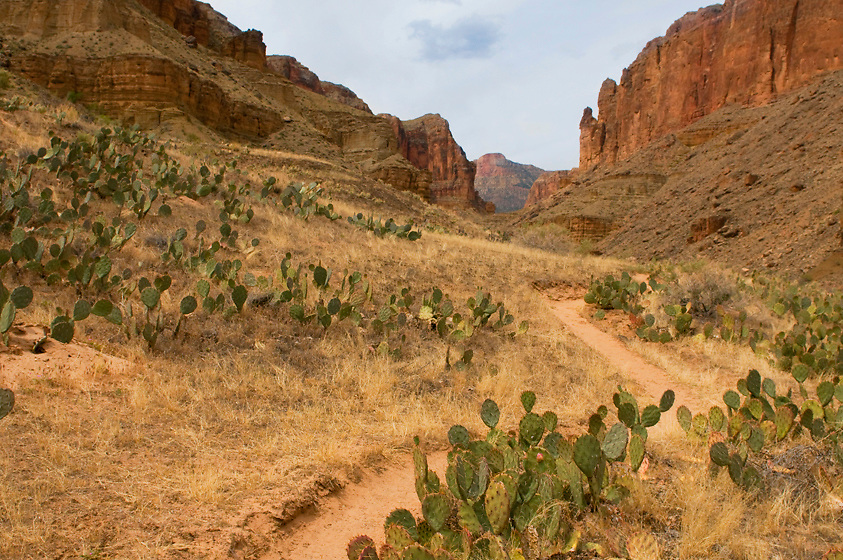 There is a good trail from the Colorado River up Kwagunt Canyon. I just love it when the canyon widens and meadows full of grass, flowers, and prickly pear open up before you, cliffs surrounding in the distance.<br />