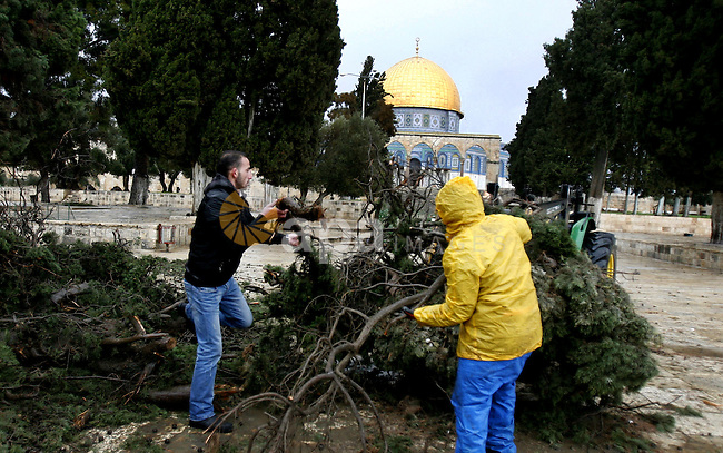 Palestinians try to remove a tree downed by strong winds in front of the Dome of the Rock on the compound know to Muslims as al-Haram al-Sharif during stormy weather in Jerusalem's Old City January 7, 2013. Photo by Mahfouz Abu Turk