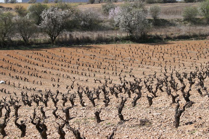 tempranillo bodegas frutos villar , cigales spain castile and leon