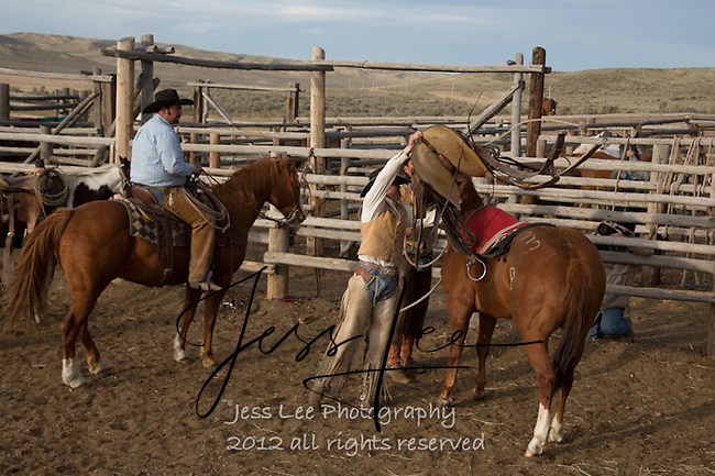 getting ready Cowboys working and playing. Cowboy Cowboy Photo Cowboy, Cowboy and Cowgirl photographs of western ranches working with horses and cattle by western cowboy photographer Jess Lee. Photographing ranches big and small in Wyoming,Montana,Idaho,Oregon,Colorado,Nevada,Arizona,Utah,New Mexico.