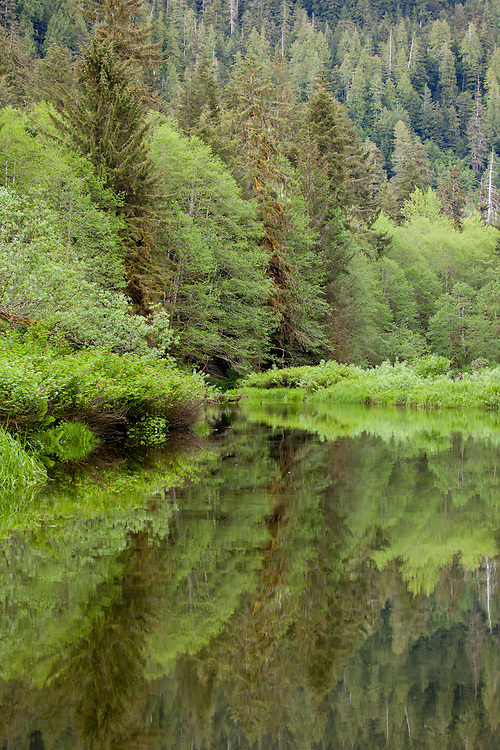 Reflected scenery in the Khutzymateen Grizzly Bear Sanctuary