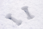 Two dumbbell-shaped prints made by weights in snow Winter scenic healthy lifestyle and fitness concept