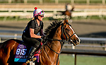 October 28, 2019 : Breeders' Cup Juvenile Turf entrant Peace Achieved, trained by Mark E. Casse, exercises in preparation for the Breeders' Cup World Championships at Santa Anita Park in Arcadia, California on October 28, 2019. Scott Serio/Eclipse Sportswire/Breeders' Cup/CSM