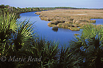 Salt marsh with palmetto in foreground, St. Marks National Wildlife Refuge, Florida, USA<br /> Slide # SFL-06