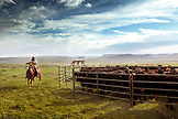 USA, Wyoming, Encampment, a cowboy gets redy to rope calves for branding, Big Creek Ranch