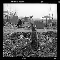 A damaged stone statue of a dog sits amidst ruins of a village torn down to make way for redevelopment on the outskirts of Beijing, China January 2014. (Mamiya 6, 75mm, Kodak TRI-X film)