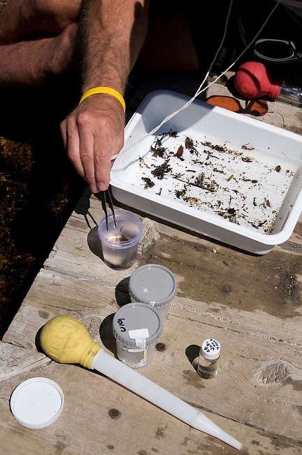 research, researcher, volunteers, entomology, field study, search for the rare mayfly, Ephemerella apopsis, conducted by Brian Heinold in Rocky Mountain National Park, Colorado, USA