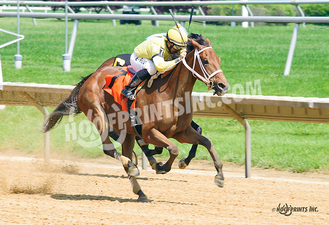 Sweet Sandy winning at Delaware Park on 6/1/16