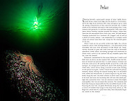 "Preface written by Dale Sanders for the book ""The Emerald Sea - Exploring the Underwater Wilderness of the North Pacific Coast"".  Published by Whitecap Books in 1993 this Hard Cover Book featured 120 full color photos by Dale Sanders. Signed copies available for $39.95"