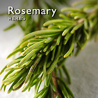 Rosemary Pictures   Rosemary Food Photos Images & Fotos