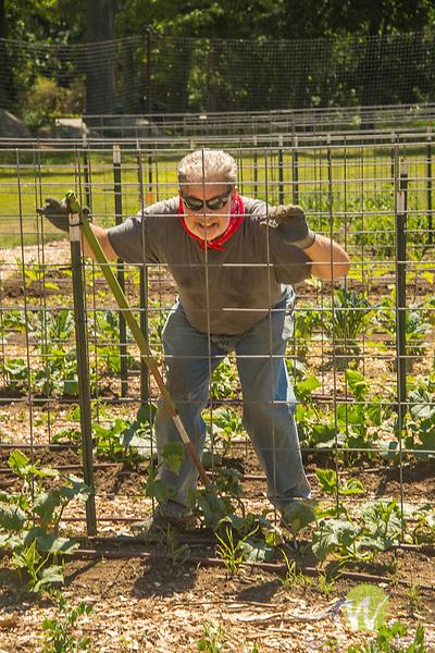 YMCA community garden. Richard Feil cultivating.