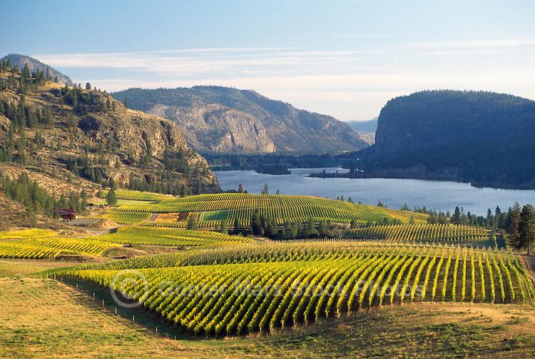 Vineyards in Autumn at Vaseux Lake. South Okanagan Valley, British Columbia, Canada