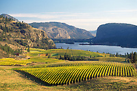 Vineyards in Autumn at Vaseux Lake. South Okanagan Valley, British Columbia, Canada