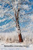 Marek, CHRISTMAS LANDSCAPES, WEIHNACHTEN WINTERLANDSCHAFTEN, NAVIDAD PAISAJES DE INVIERNO, photos+++++,PLMP01119Z,#xl#