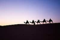 Camels in desert.<br />