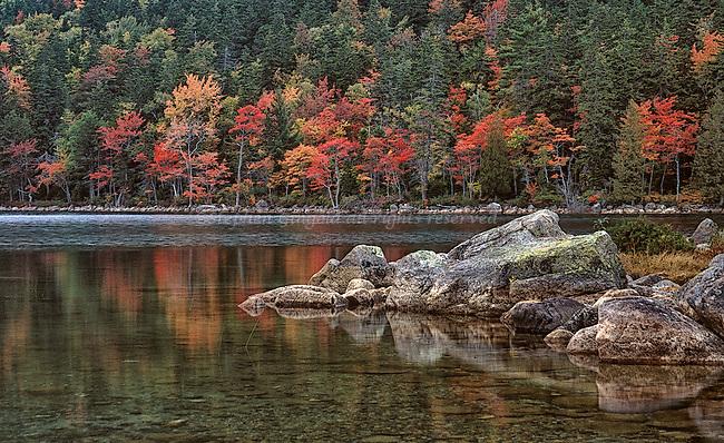 Shoreline foliage at Jordan Pond, Acadia National Park, Maine.