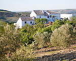 Olive trees whitewashed farmhouse in countryside, near Alhama de Granada, Spain