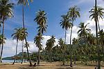 Temae Beach, Moorea, French Polynesia; a grove of palm trees at Temae Beach , Copyright © Matthew Meier, matthewmeierphoto.com All Rights Reserved