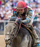 BALTIMORE, MD - MAY 20: No Mo Dough  #5, ridden by Jose Ortiz, wins the LARC Sir Baron Stakes on Preakness Stakes Day at Pimlico Race Course on May 20, 2017 in Baltimore, Maryland.(Photo by Scott Serio/Eclipse Sportswire/Getty Images)