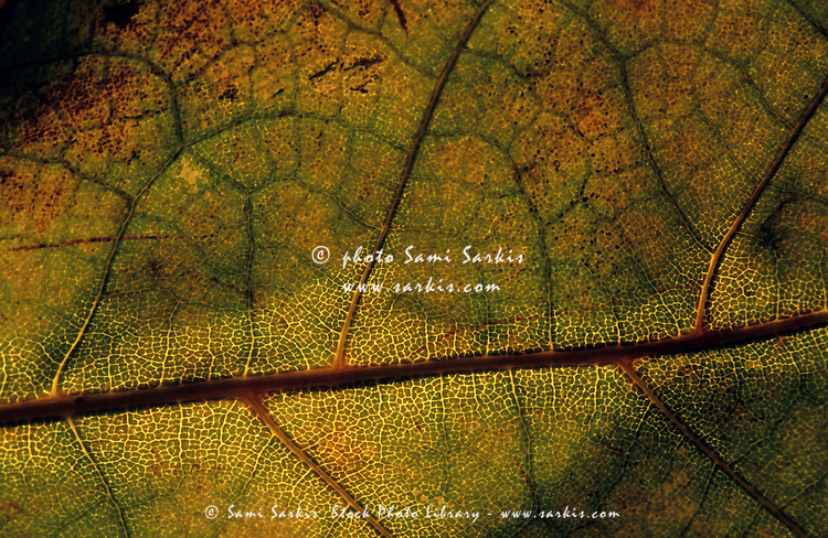 Intricate and natural patterns of a leaf during autumn.
