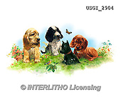 GIORDANO, CUTE ANIMALS, LUSTIGE TIERE, ANIMALITOS DIVERTIDOS, paintings+++++,USGI2904,#AC# ,dogs