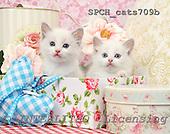 Xavier, ANIMALS, cats, photos, SPCHCATS709B,#A# Katzen, gatos