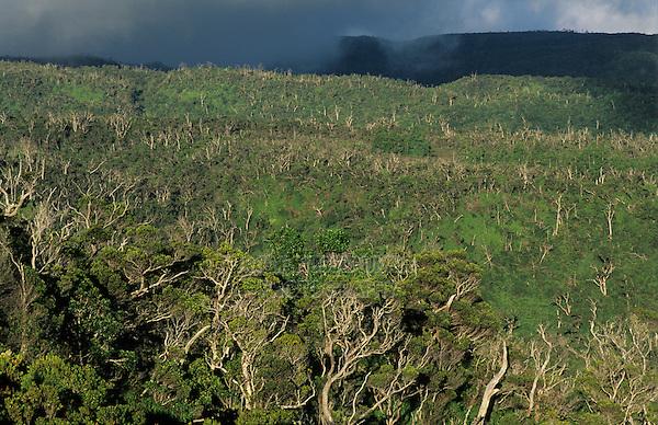 View of Alakai Swamp, Kauai, Hawaii, USA, August 1996