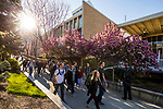 1704-06 GCS Spring 0004<br /> <br /> 1704-06 GCS Spring<br /> <br /> April 5, 2017<br /> <br /> Photography by Nate Edwards/BYU<br /> <br /> &copy; BYU PHOTO 2016<br /> All Rights Reserved<br /> photo@byu.edu  (801)422-7322