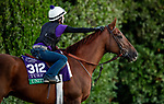 OCT 26:Breeders' Cup Turf entrant United, trained by Richard E. Mandella, at Santa Anita Park in Arcadia, California on Oct 26, 2019. Evers/Eclipse Sportswire/Breeders' Cup