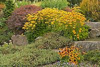 Northwest garden in summer