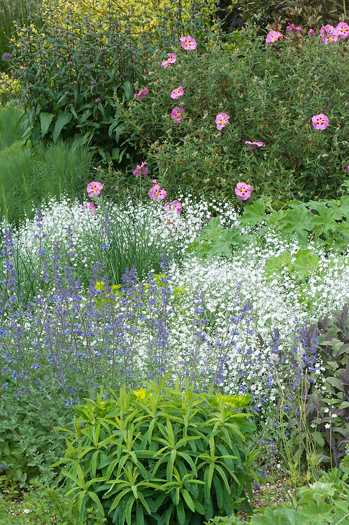 Beth Chatto's Gravel Garden, Essex, late May.