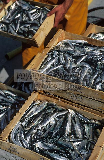 Europe/France/Languedoc-Roussillon/66/Pyrénées-Orientales/Port-Vendres: retour de pêche, déchargement des sardines