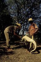 Illegal cayman hunting, Pantanal Matogrossense, Brazil.